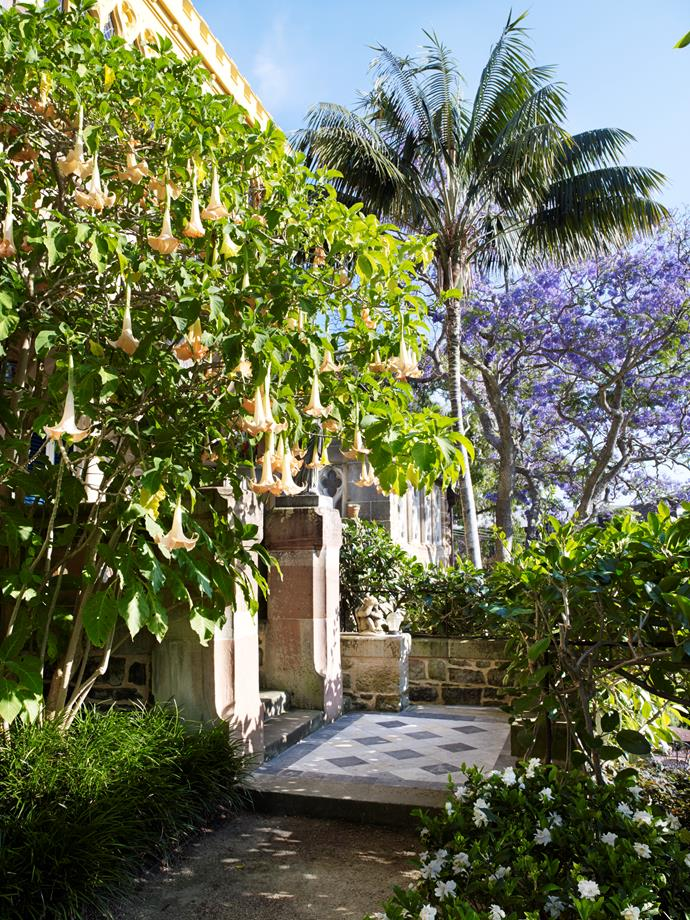 Angel's trumpet (Brugmansia cvs.) frames the entry stairs.