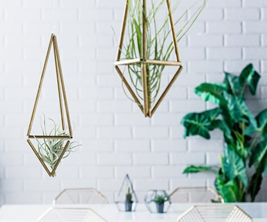 Weekend project: DIY air plant hangers