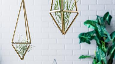 Weekend project: DIY air plant hangers
