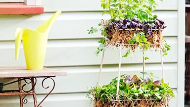 How to plant a herb garden
