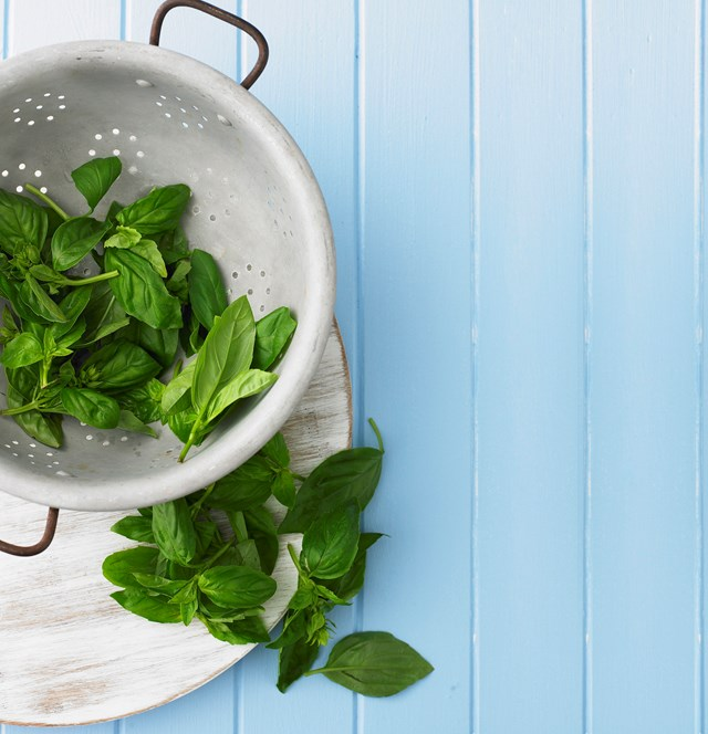 Basil is easy to grow from seed and is a popular herb in Mediterannean cuisine.