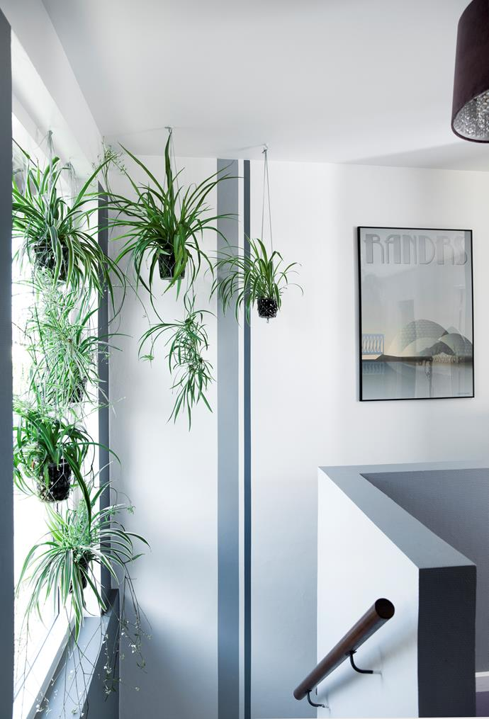 Taking advantage of the ceiling height, Jane made knotted plant hangers and hung her beloved plants at varying heights. Artwork by Vissevasse.