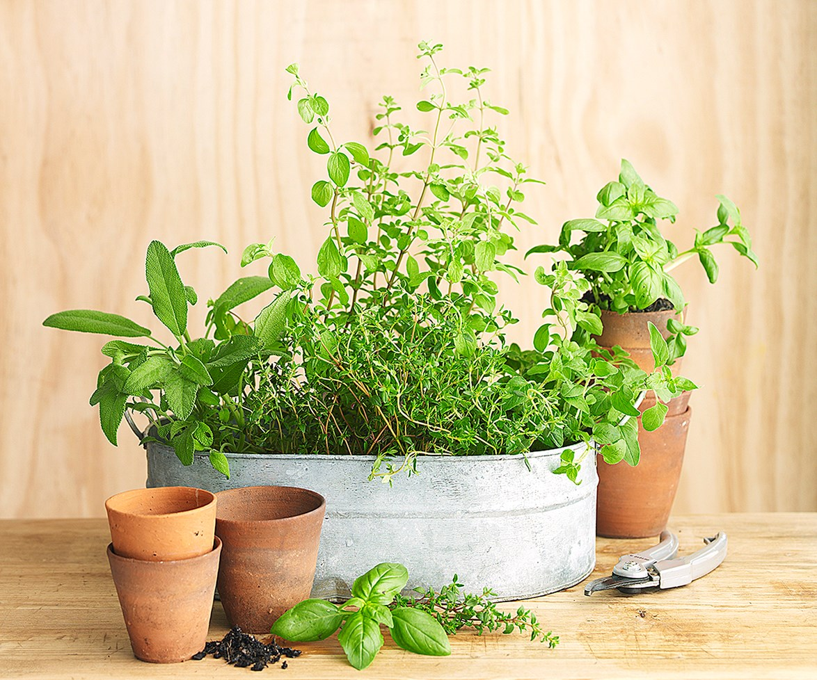 """Find out the [top 10 easy to grow herb plants](http://www.homestolove.com.au/10-easy-to-grow-herb-plants-3214