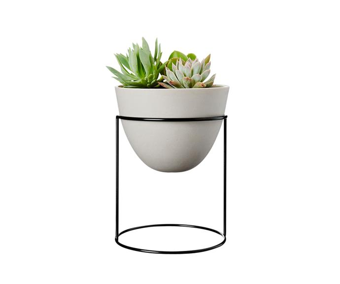 "Ivy Muse ""Nest"" **planter**, $160, [Life Interiors](http://www.lifeinteriors.com.au/?utm_campaign=supplier/|target=""_blank"")."