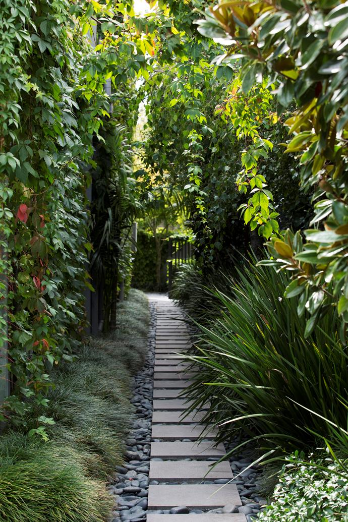 The side garden exudes jungle chic. Boston ivy grows on the wall as Virginia creeper drapes overhead. Mondo grass and Dietes iridioides perennials flank a path of bluestone steppers.
