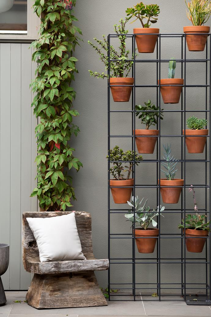 Potted succulents sit pretty in a metal frame, beside a column of Virginia creeper.