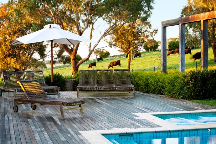 The pool deck comes with views of the neighbours' contented cattle.