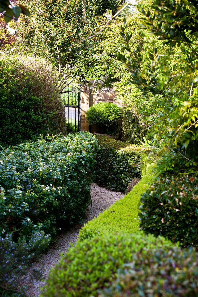 Hedges of box (left) and Escallonia delineate a gravel pathway.