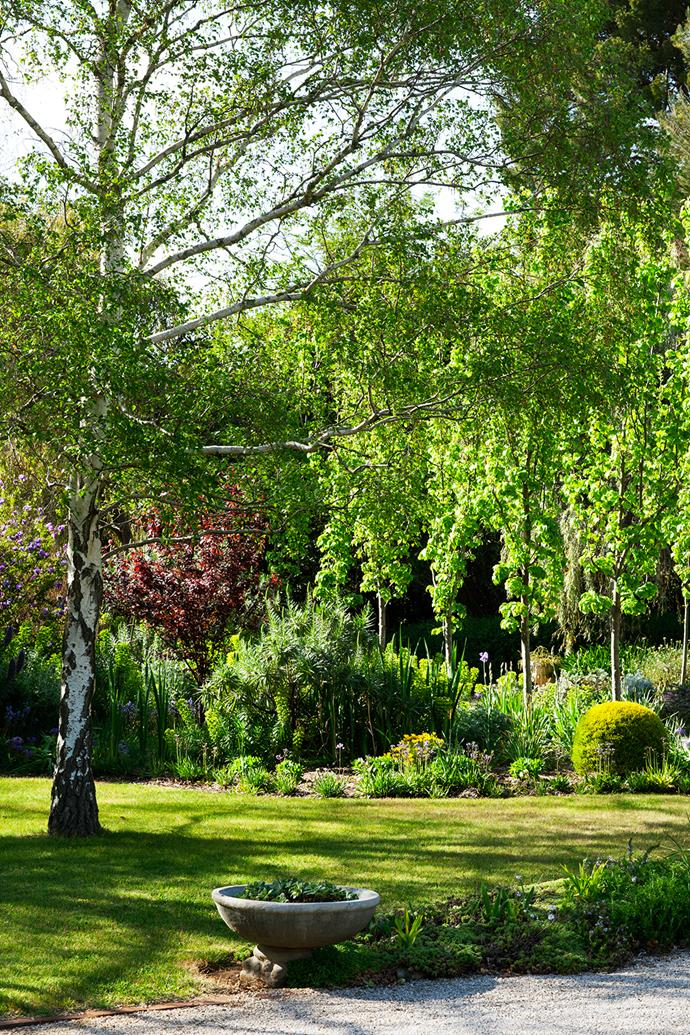 The lacy leaves of a silver birch give dappled shade while the deep-red foliage of Prunus and a row of ornamental pears (Pyrus calleryana 'Capital') provide texture in the background.