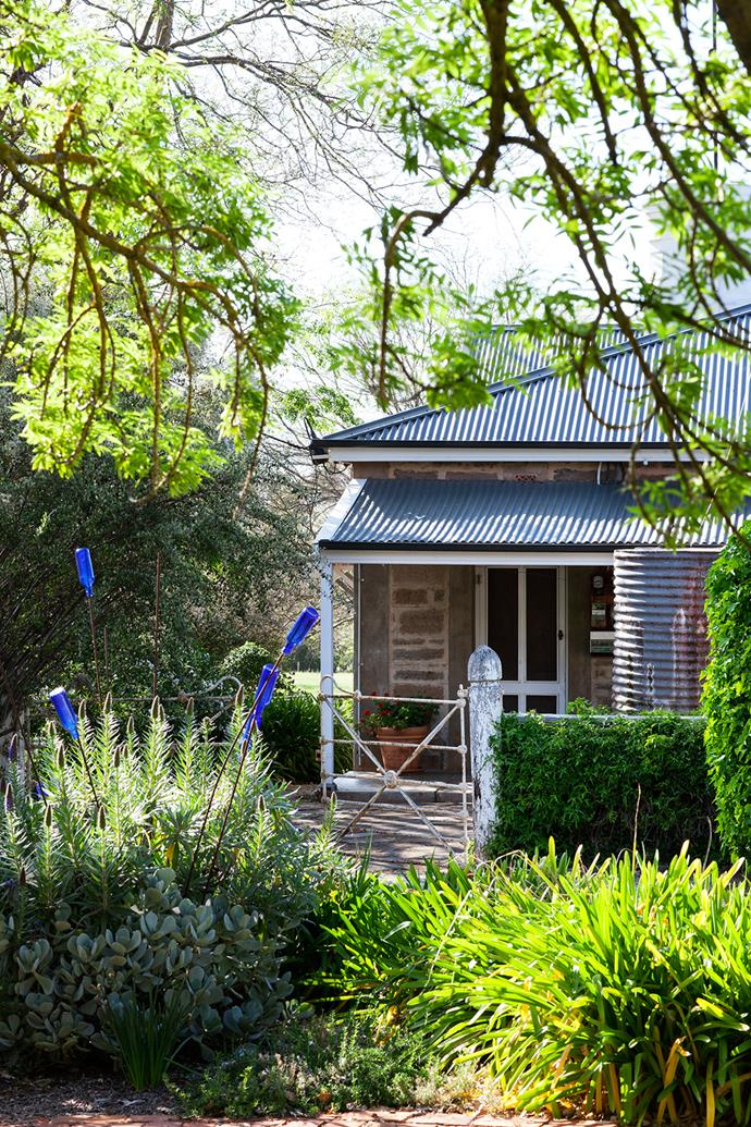 "With her artistic eye, Jenni has created lovely textures in her garden, although she insists it's ""mostly an accident"". Here, the homestead is framed by branches of a golden ash with plantings of echium, succulents and agapanthus producing a symphony of greens. Popping out of the echium are steel rods topped with blue bottles."