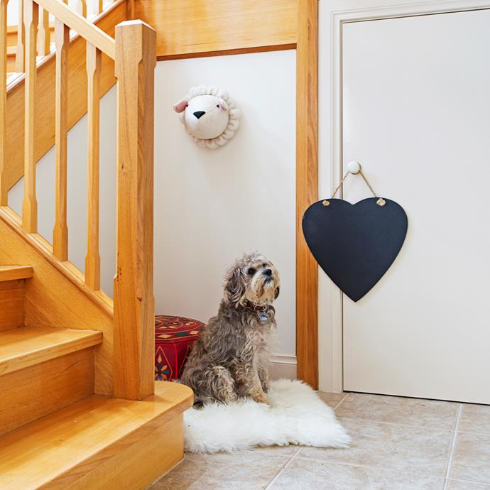 Eight-year-old Scruffy makes himself comfortable at the base of the stairs.
