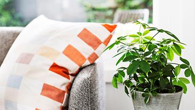 Match the indoor plant to your personality