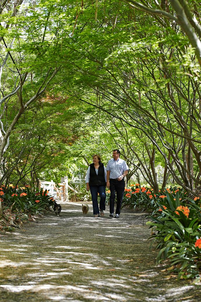 Sue, Wayne and Cubby, the Australian silky terrier, stroll beneath the Japanese maples.