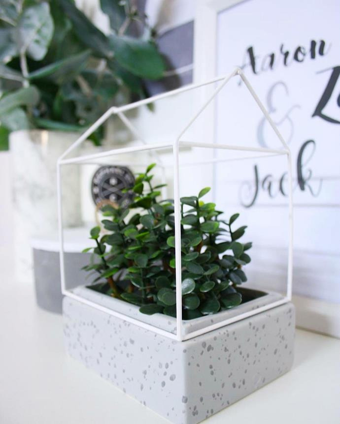 "A terrarium planted with jade plant. Photo via [@thediydecorator](https://www.instagram.com/thediydecorator/?utm_campaign=supplier/|target=""_blank"")."