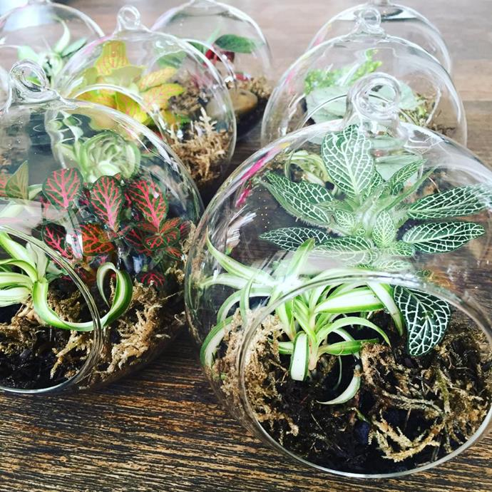"Filtered sun is best for terrariums. Photo via [@flowerseverywhereflorist](https://www.instagram.com/flowerseverywhereflorist/?utm_campaign=supplier/|target=""_blank"")."