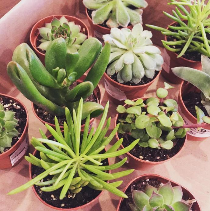 "Stock up on miniature plants. Photo via [@sarahlaurenbell](https://www.instagram.com/sarahlaurenbell/?utm_campaign=supplier/|target=""_blank"")."