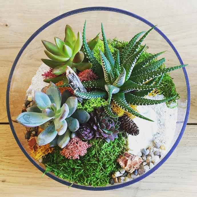 "The tiny, lush landscape will add instant life to your interiors. Photo via [@plantterrariums](https://www.instagram.com/plantterrariums/?utm_campaign=supplier/|target=""_blank"")."