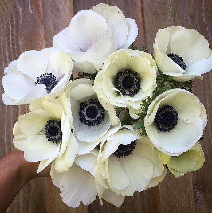 "Delicate anemones are a beautiful winter flower. Photo via [@junesblooms](https://www.instagram.com/junesblooms/?utm_campaign=supplier/|target=""_blank"")."