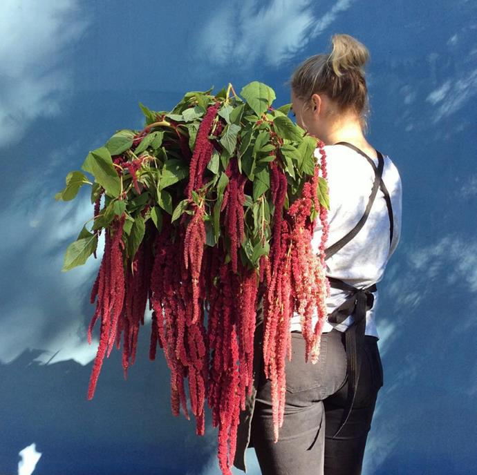 """Beautiful draping amaranthus is an unusual choice that is sure to delight mum. Photo via [@thefloraldecorator](https://www.instagram.com/thefloraldecorator/?utm_campaign=supplier/