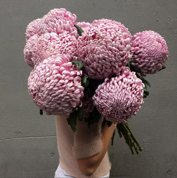 """Big pompom chrysanthemums are easily one of the most popular Mother's Day flowers. Photo via [@katiemarxflowers](https://www.instagram.com/katiemarxflowers/?utm_campaign=supplier/