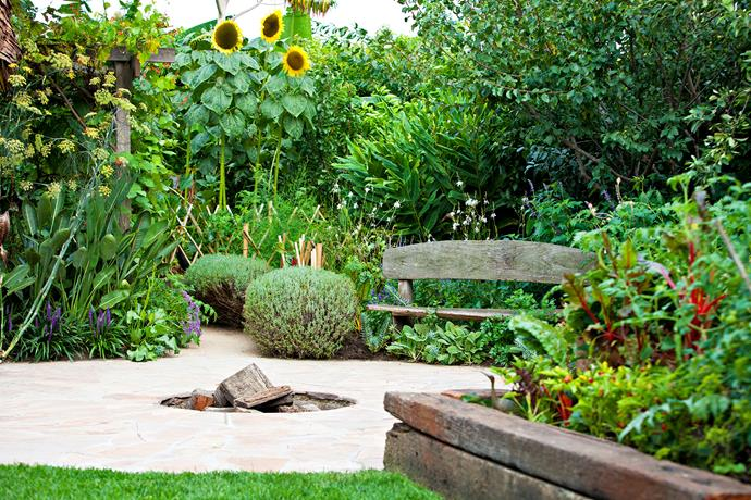 The back garden has several accent plants, such as a lemon-scented gum and a giant ornamental banana plant. These combine with hedges, paths, a small circle of lawn and a fire pit to give overall structure. Add to this a shed (complete with a television and tabletennis table) and a chook pen, and it's nothing short of a miracle in cohesive design.
