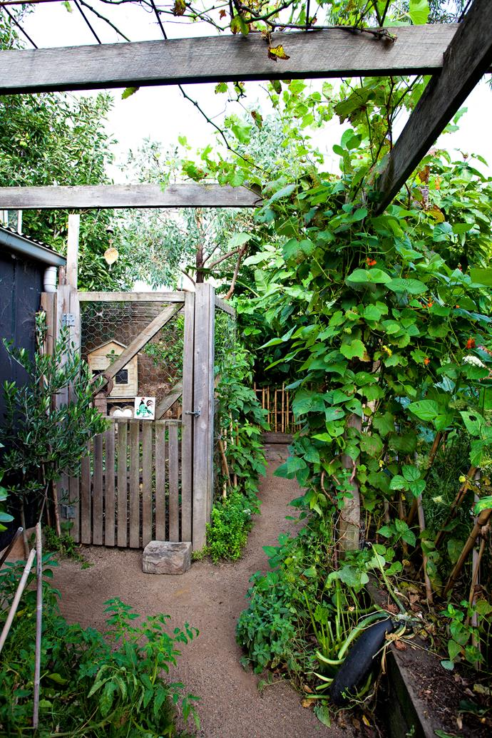 """Near the chook shed is a section that is laid out more formally. """"It's where I plant seasonal vegies such as corn, in streamlined rows, and let the zucchini and pumpkins roam. I love the lush look of massed crops thriving from late spring; I call it my lazy summer garden,"""" he says."""