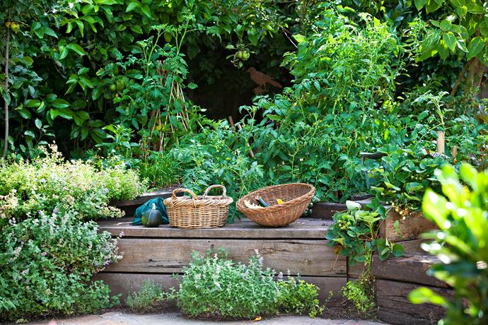 However, surprisingly, Hendrik says it's not a garden to look at – rather a place for growing and harvesting. His vegetables are not grown in rows but in raised beds packed with vegetables from seedlings to mature specimens.