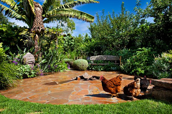 Almost all scraps and vegetable matter are used as food for Hendrik's chooks. They make a deep litter that, in turn, provides compost for the garden.