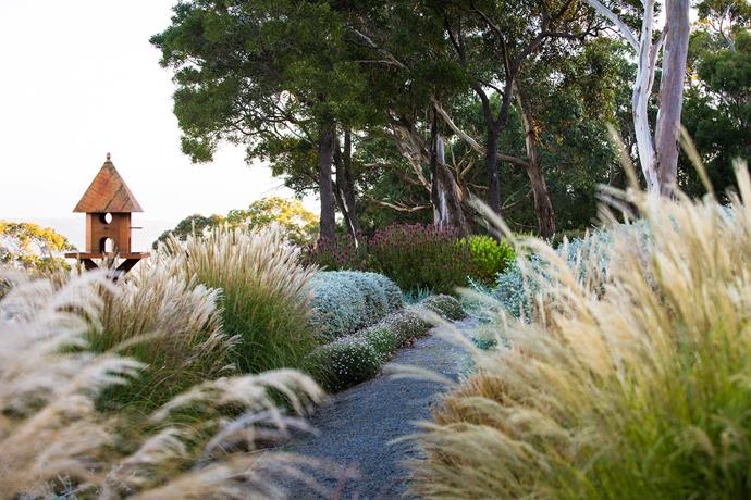A path cuts through shoulder-high, feathery *Miscanthus transmorrisonensis* and meanders past seaside daisies (*Erigeron karvinskianus*), grey-silver mounds of *Teucrium fruticans* and red and lime-topped spires of *Leucadendron*. A stand of gums, *Eucalyptus ovata*, provides a shady spot to rest and take in the bay view.