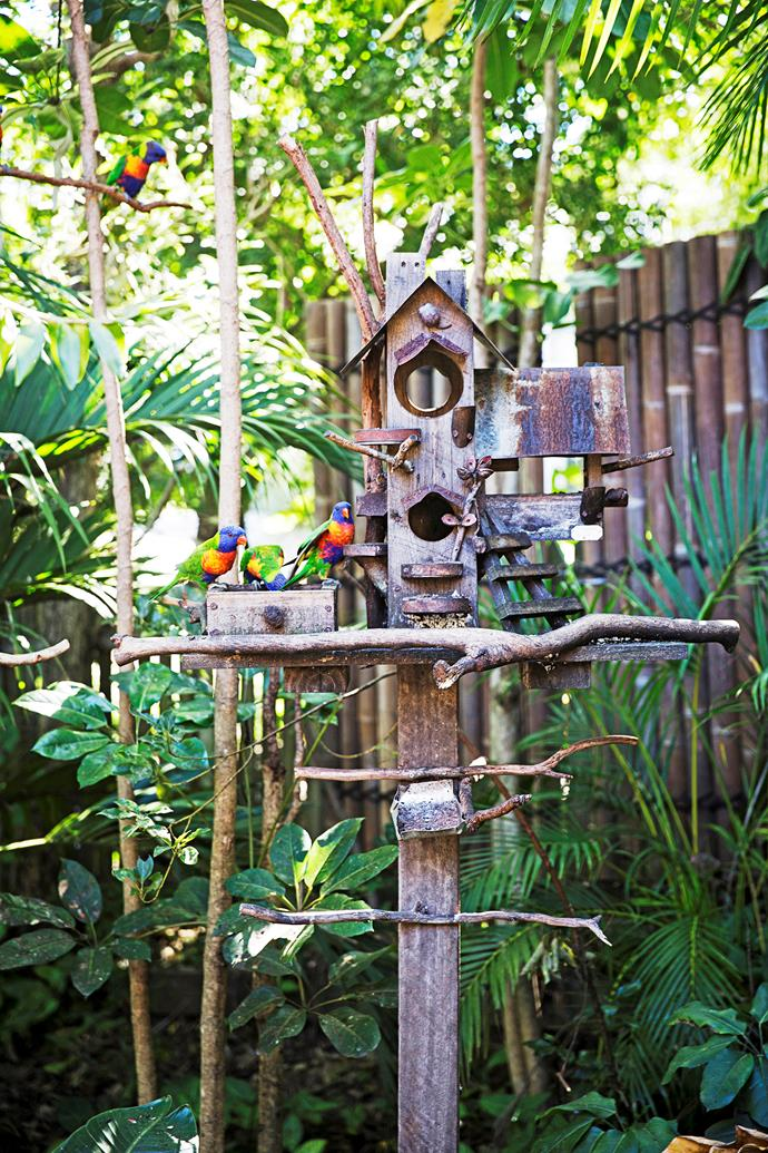 The bird feeder, from a local market, attracts lorikeets every day.