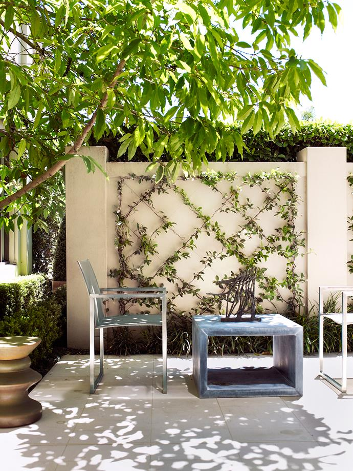 **7. Make a feature wall.** Got green fingers? Create a feature wall by creating a trellis-style structure for climbing plants. It makes a calming backdrop for an afternoon cup of tea or coffee. Photo: Prue Ruscoe / Bauersyndication.com.au.