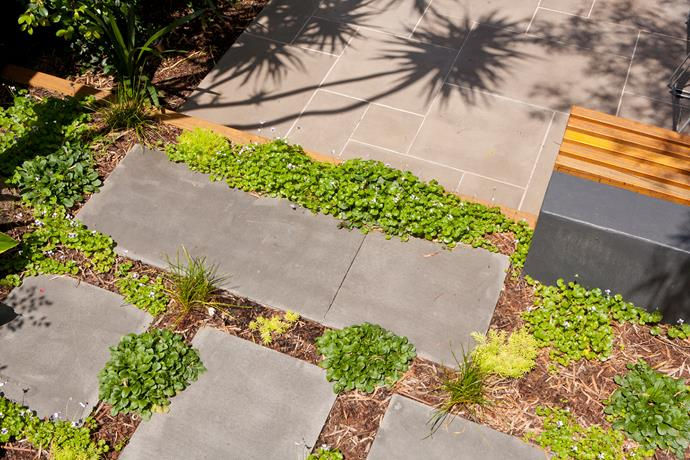 Ground-cover plants will eventually fill any gaps between the pavers and form a lush, living carpet.