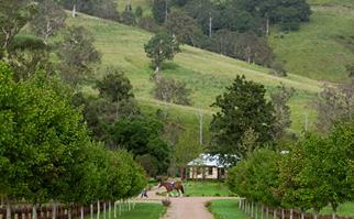 Allynbrook Park