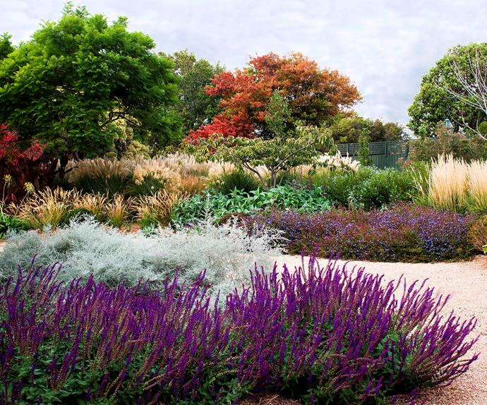 Best Australian native feature plants