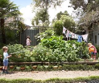 beginners guide vegetable gardening