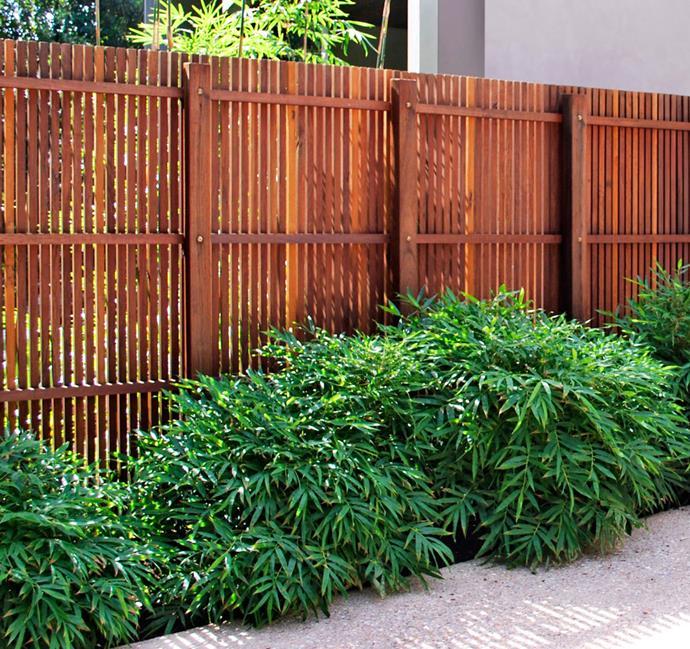 *Bambusa guangxiensis* (Chinese dwarf bamboo).