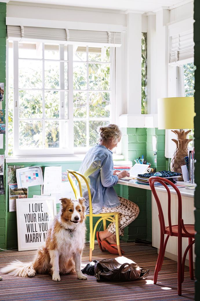 Border collie Sinbad keeps his owner company while she works in her favourite quiet space.