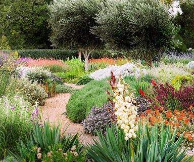 A guide to water-wise gardening