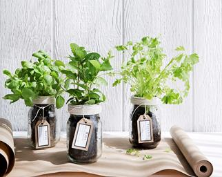 herbs in glass jars