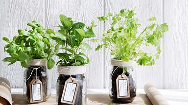 Grow your own Mediterranean herbs