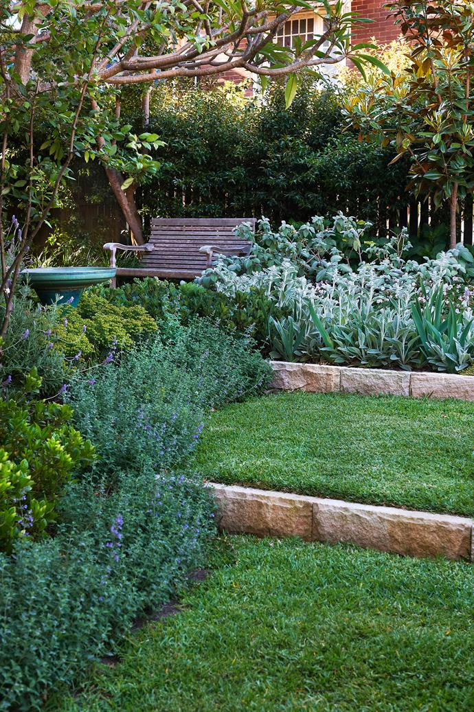 "The front garden is a symphony of [colour and textures](http://www.homestolove.com.au/sydney-couple-create-a-dreamy-garden-with-contrasting-textures-2991/?utm_campaign=supplier/|target=""_blank""). This silvery-grey block is created by combining strappy leafed bearded iris with lamb's ears and *Plectranthus*."