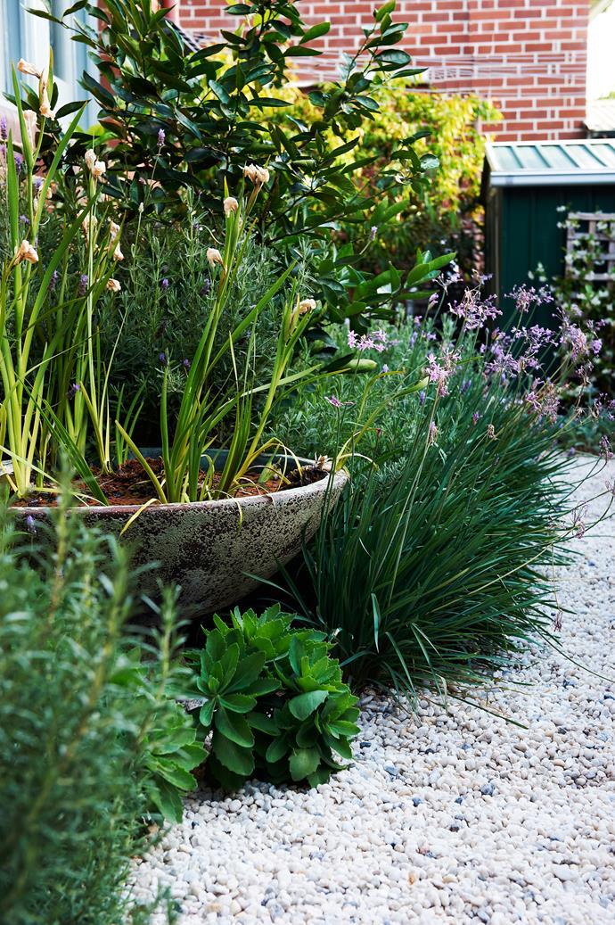 Society garlic, coastal rosemary and Sedum 'Autumn Joy' form a soft green edge along the pea gravel, which is laid over a filter fabric that allows water to permeate.