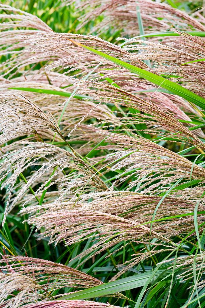 """Planted in drifts, this combination of plants creates a [tapestry of texture](http://www.homestolove.com.au/sydney-couple-create-a-dreamy-garden-with-contrasting-textures-2991/
