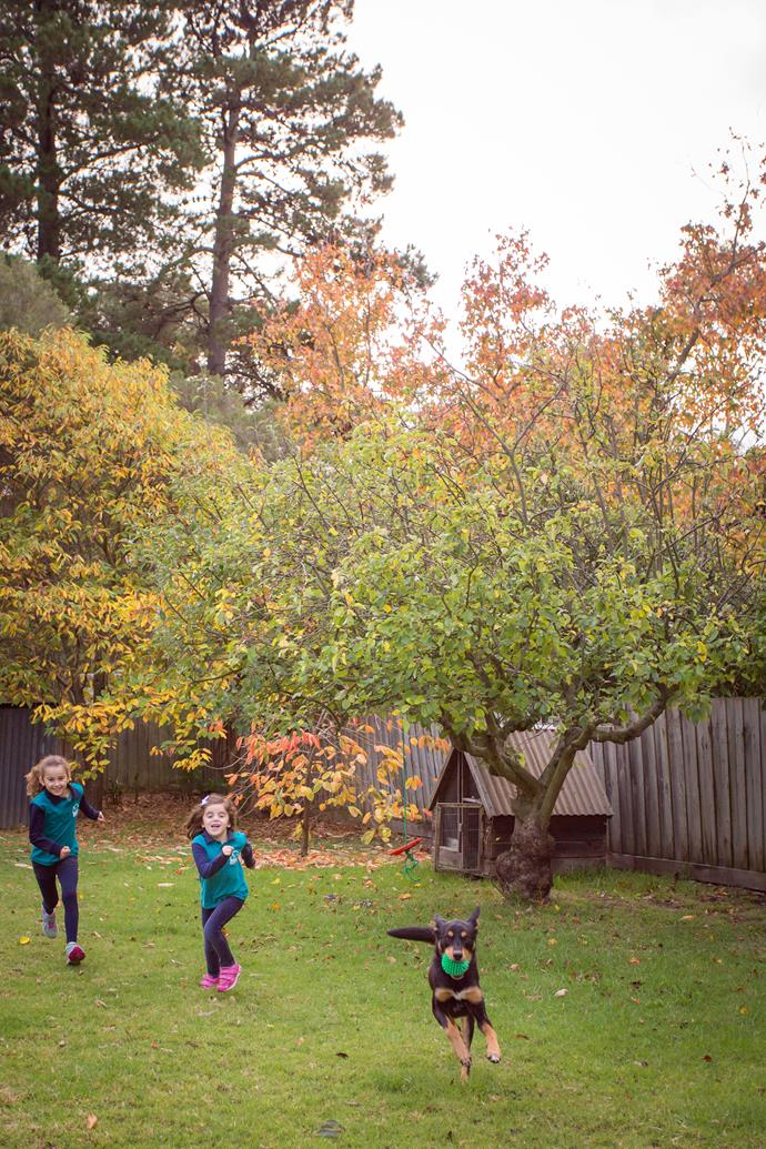 """""""The big backyard is our much-loved kelpie Daryl's domain and it's mostly untouched, awaiting its future incarnation as a hub of outdoor family activity,"""" says Jacqi."""