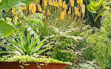 9 colourful plant varieties for your garden