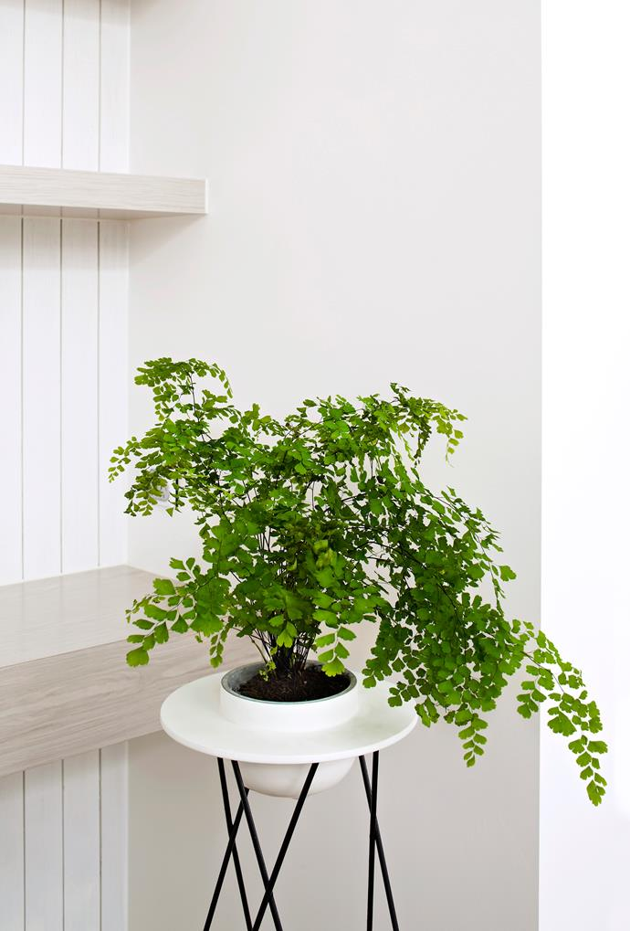 Lush greenery can easily become a standout feature of your home with the help of a stylish plant stand.