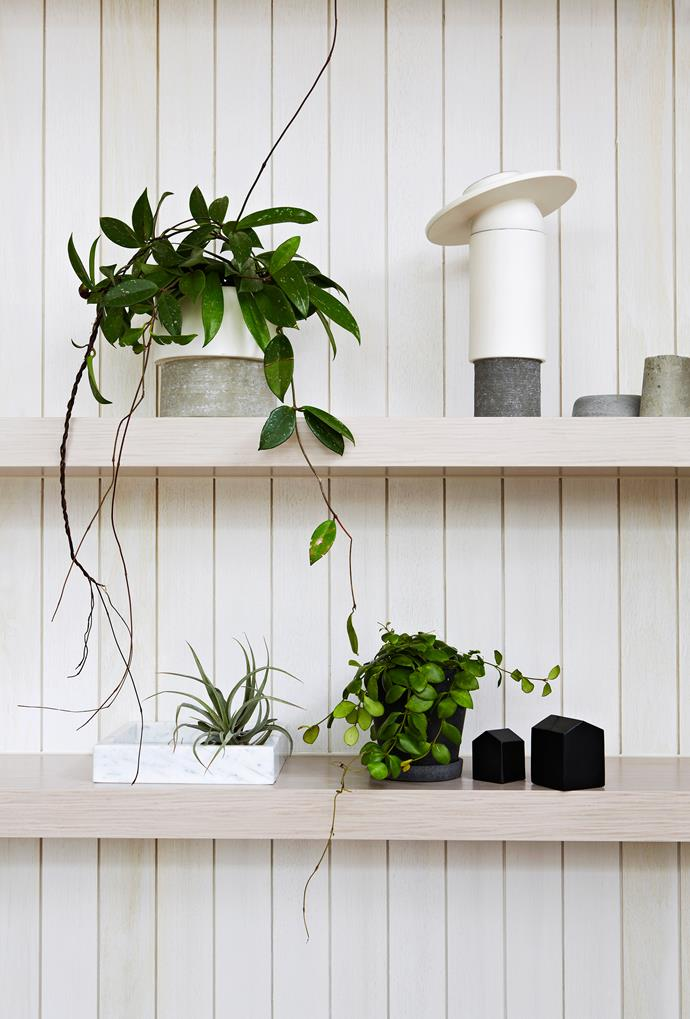Earthy ceramic vessels complement the lush greenery of indoor plants.