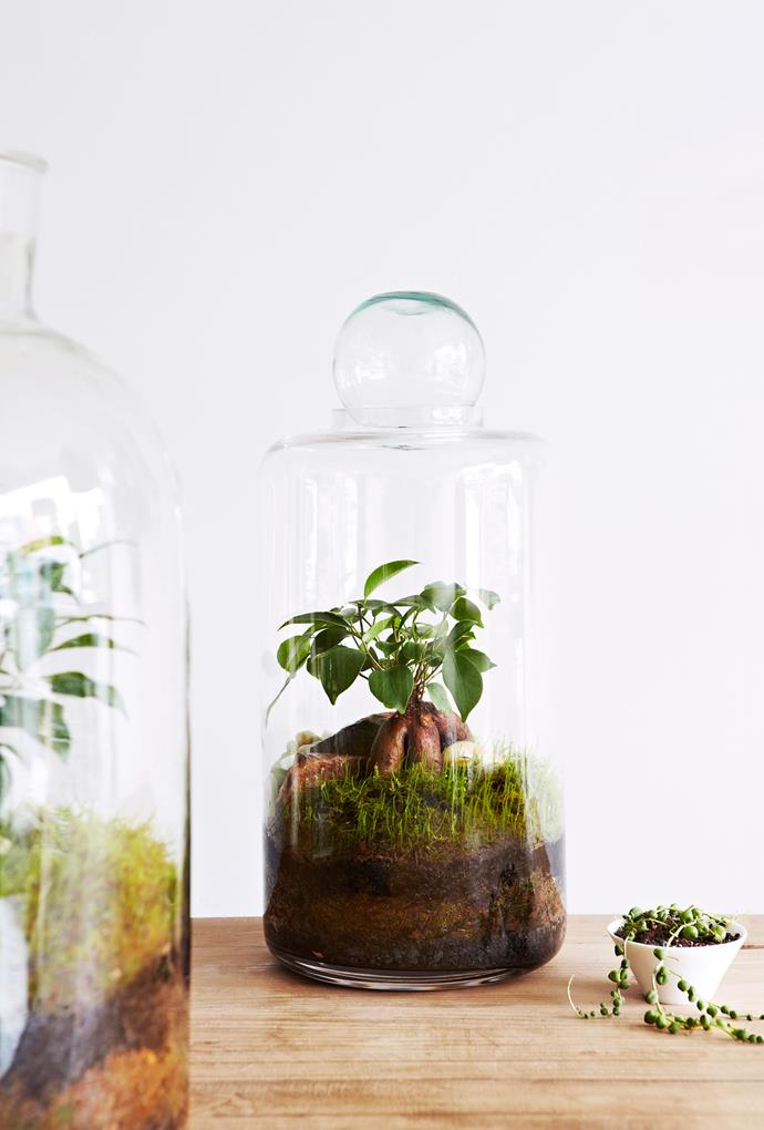 """Easy to make and maintain, a [terrarium](http://www.homestolove.com.au/what-is-a-terrarium-and-how-do-i-make-one-3439