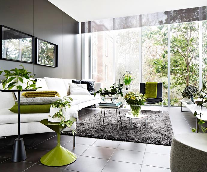 lush indoor plants