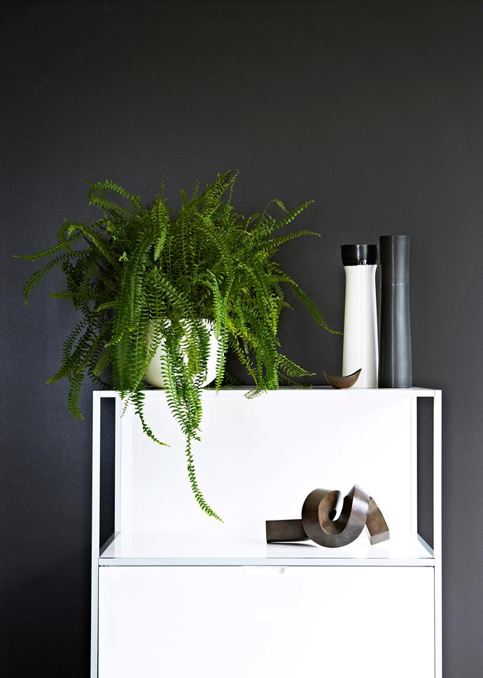 """""""Plants complete an interior. Aside from their intrinsic beauty they bring an intangible resonance to a space,"""" says Paul Hyland, nurseryman at [Glasshaus](http://glasshaus.com.au/?utm_campaign=supplier/